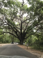 tree from park