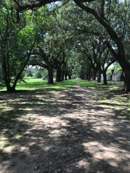 trees from south carolina